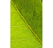 Photosynthesis Photographic Print