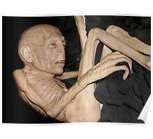 Voldemort has shrunk Poster