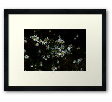 0133 - HDR Panorama - Daisies Framed Print