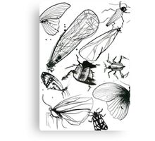 Insect page Canvas Print