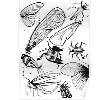Insect page Poster