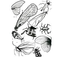 Insect page Photographic Print