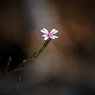 Just A Flower... by BluAlien