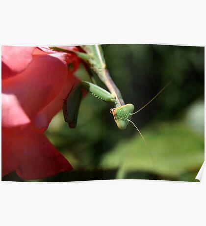 Rose Mantis Poster