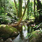 Manoa Valley Stream by kevin smith  skystudiohawaii