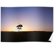 Lonely tree silhouette on open field at sunset  Poster