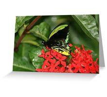 cairns birdwing Greeting Card