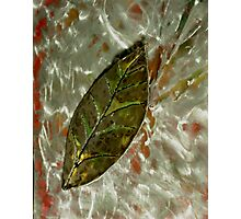 A SUMMER LEAF Photographic Print