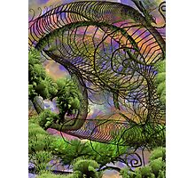 The Knander Forests Of Planet Crowlar Photographic Print