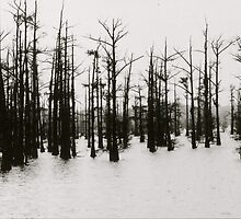 Cypress Trees by soulexperience