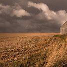 Field by John Poon