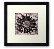 Paper Daisy in pencil Framed Print