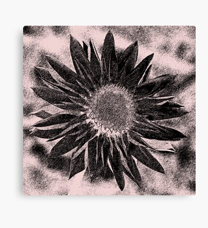 Paper Daisy in pencil Canvas Print
