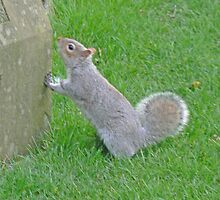 A Squirrel Surveys A Memorial Stone by AARDVARK