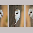 Barn Owl Triptych by Val Saxby