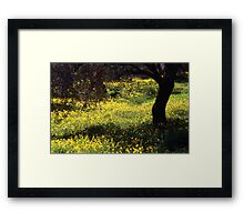 Wild Flowers in an Olive Grove  Framed Print