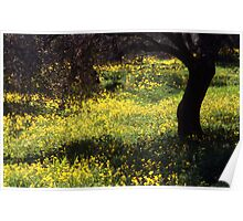 Wild Flowers in an Olive Grove  Poster