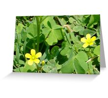 Buttercup Pair Greeting Card