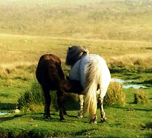Dartmoor Pony and foal by SilkyAlien