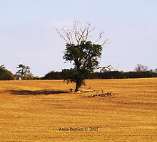 Lonely Old Tree by SilkyAlien