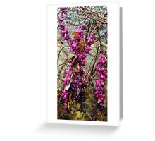 Berry swag Greeting Card