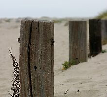 Old Fence Poles by Henrik Lehnerer