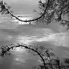 Lake Washington Reflection by Tom Vaughan