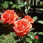 Red Roses by Wanda  Mascari