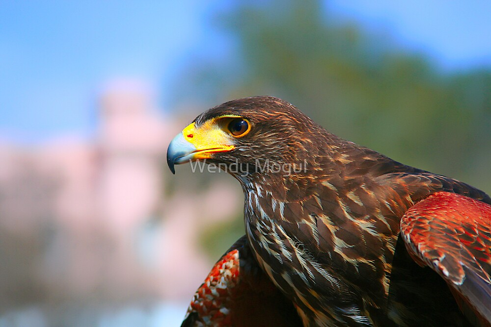 Hawk Eye by Wendy Mogul