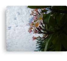 Frangipanis and Sky Canvas Print