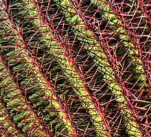 Red Spine Barrel Cactus by Roger Passman