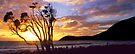 Sunrise - Waterloo Bay by Travis Easton