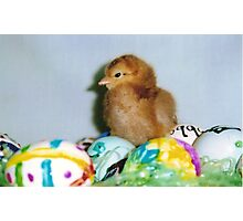 red chick on eggs Photographic Print
