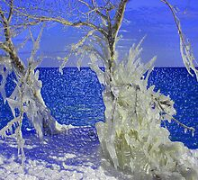 Ice on Trees by PPPhotoArt