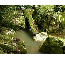 Green Log in Water Photographic Print