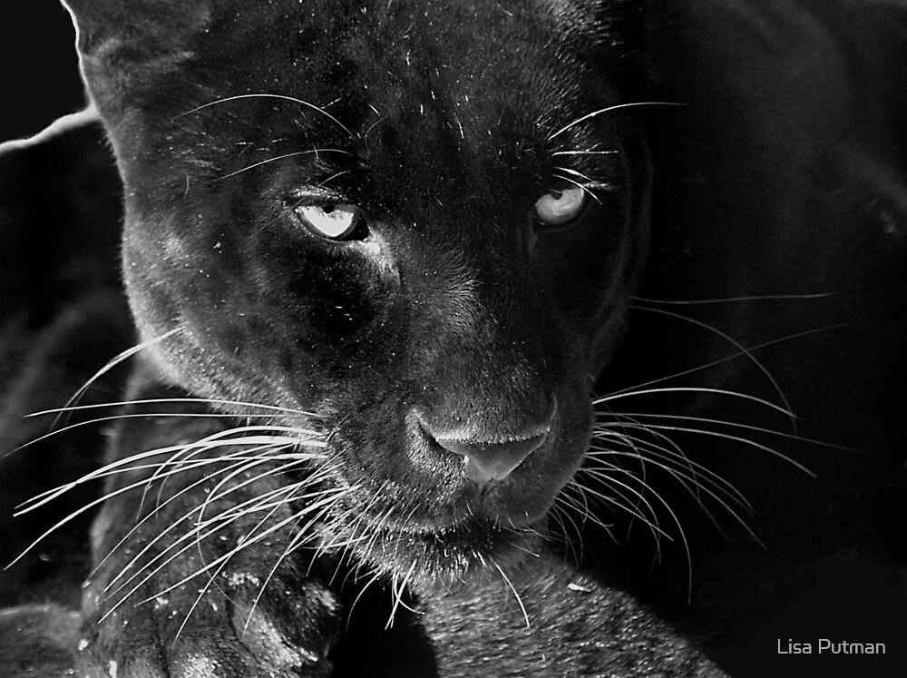 Obsidian - Black Leopard by Lisa G. Putman