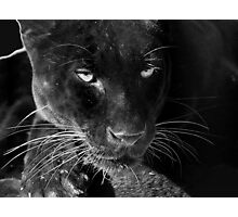 Obsidian - Black Leopard Photographic Print