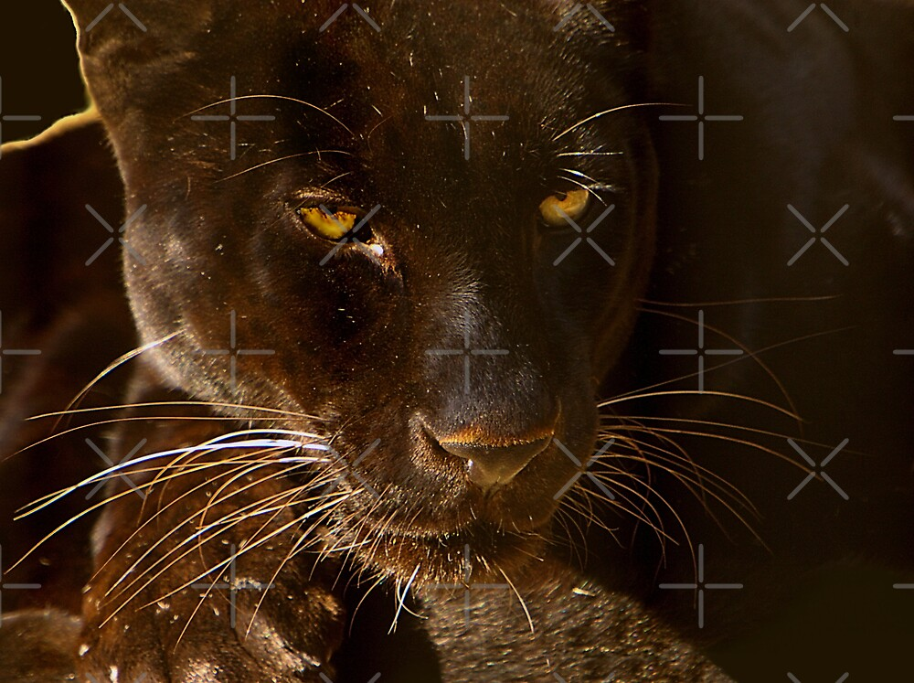 Obsidian Silk - Black Leopard by Lisa G. Putman