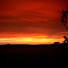 Red Sky at Night by andarna