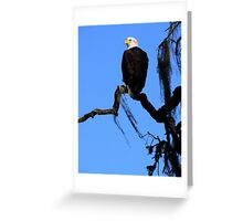 Bald Eagle & Spanish Moss, Alisal Ranch Greeting Card