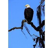 Bald Eagle & Spanish Moss, Alisal Ranch Photographic Print