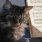 ♫ I'm A Classical Cat ♫ by heatherfriedman