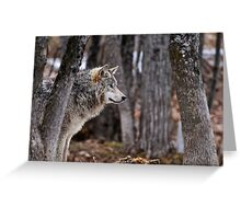Timber Wolf in trees Greeting Card