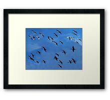 Venice Air Force Framed Print
