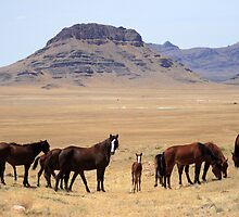 Valley of the Mustangs by Gene Praag