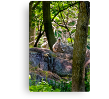 Sigh...One in every crowd Canvas Print