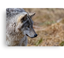 Challange Avatar 2, Timber Wolf Canvas Print