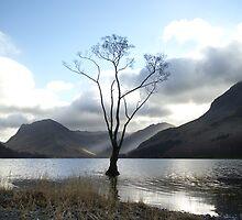 Lonesome Tree by BulletMa9net