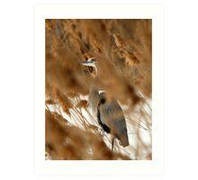 Hide & Seek - Blue Heron Art Print
