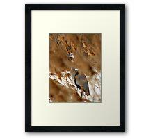 Hide & Seek - Blue Heron Framed Print